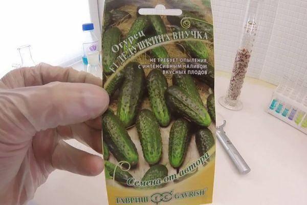 Гибрид огурцов «бабушкин секрет f1»: фото, видео, описание, посадка, характеристика, урожайность, отзывы