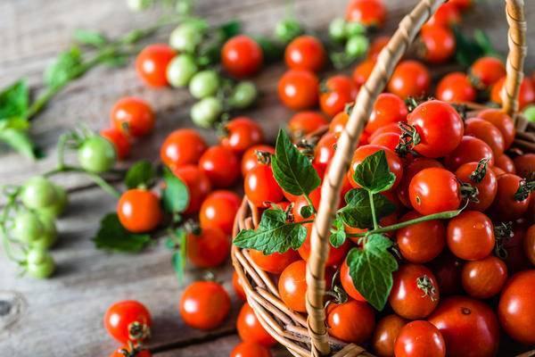 23 сорта черных томатов с фото, описанием, названиями и характеристиками для теплиц и открытого грунта подмосковья, сибири, урала, средней полосы и юга россии