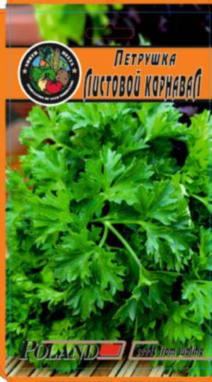 Петрушка многолетняя: описание сорта и 5 шагов агротехники