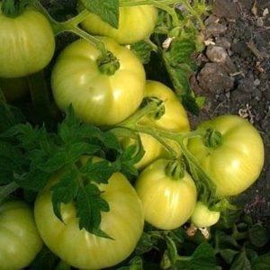 Томат лонг кипер: описание сорта, отзывы, фото, урожайность