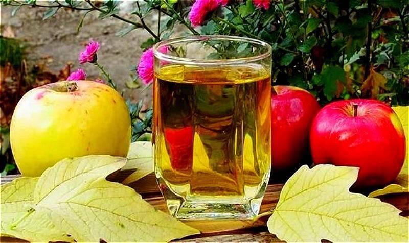 Вино из яблок — простые рецепты яблочного вина в домашних условиях