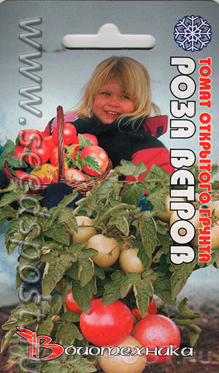 Сорт томата «роза ветров» розовоплодный штамбовый : описание, характеристика, посев на рассаду, подкормка, урожайность, фото, видео и самые распространенные болезни томатов