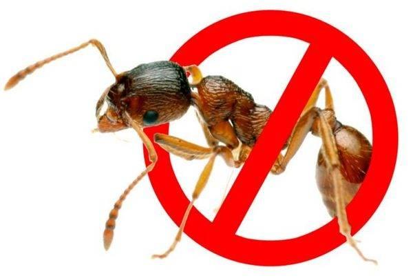 Проверенные способы как избавиться от муравьев в теплице: 4 народных способа