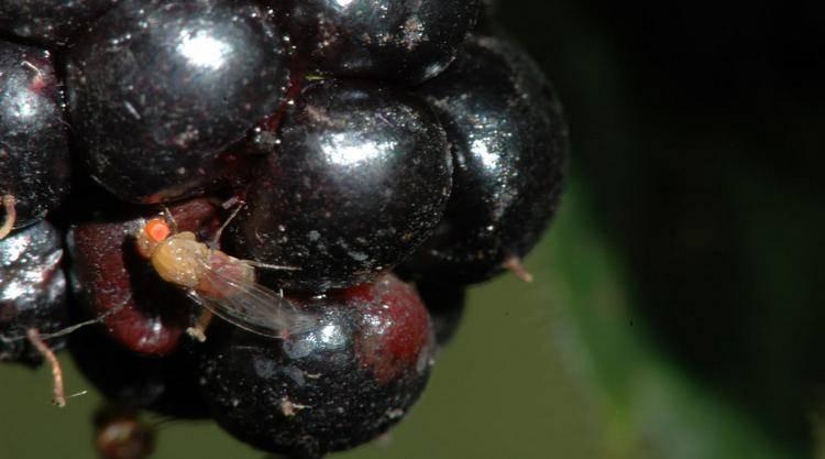 Почему вино может превращаться в уксус, как это определить и исправить