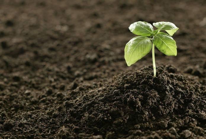Сапропель – что это такое и как правильно использовать это удобрение
