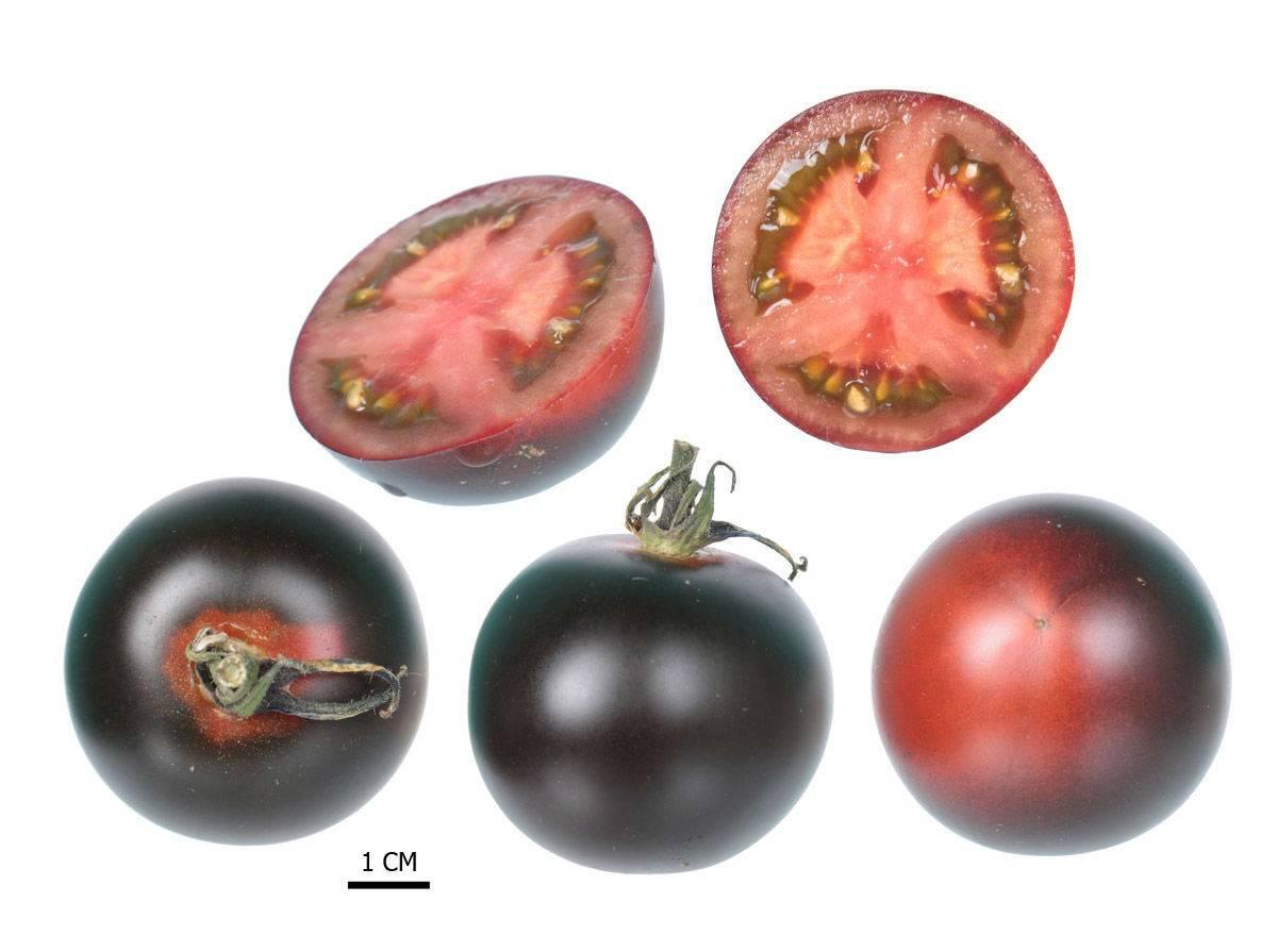 Чёрные помидоры: экзоты на томатной грядке
