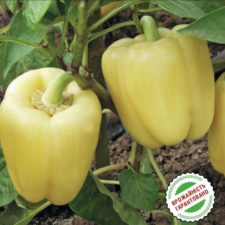 Характеристика и описание гибрида перца геркулес f1, выращивание и уход