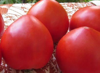 Красавица без недостатков — сорт томата «татьяна»