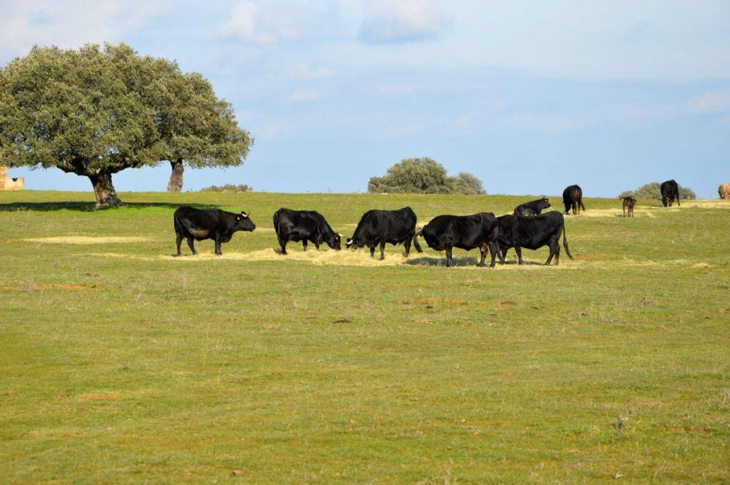 Мясо-молочные породы крс, характеристика коров молочного направления
