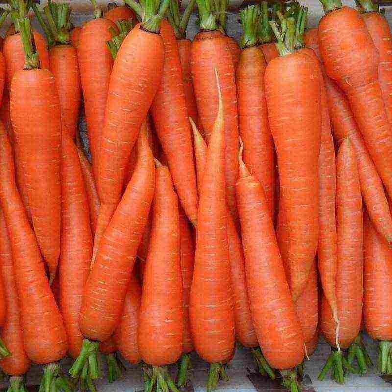 Посев моркови под зиму в 2020 году: когда сажать, сроки