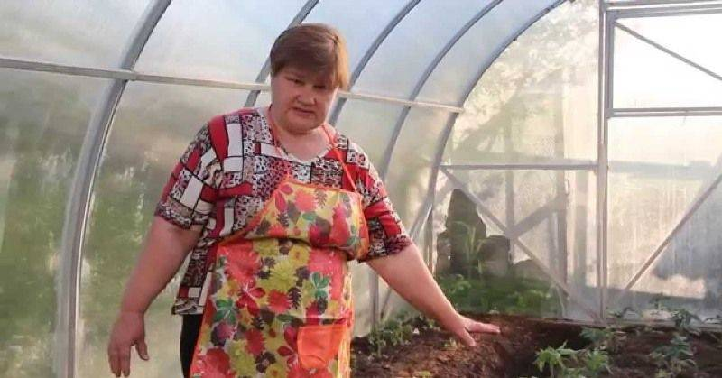 Юлия миняева сажаем цветы в улитку. посадка семян в улитку юлия миняева
