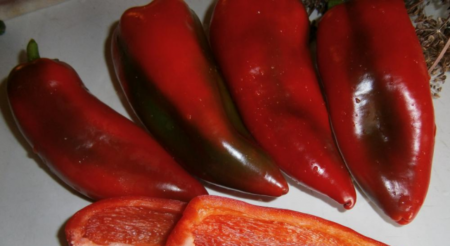 Сладкий среднеспелый перец богатырь: характеристика и описание сорта