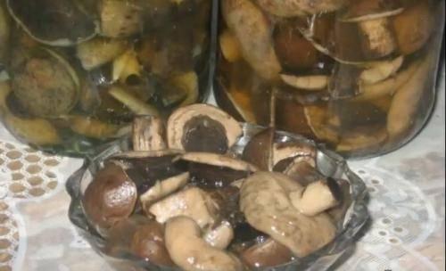 Вкусные грибы, маринованные на зиму с уксусом и без: надежные рецепты приготовления без стерилизации