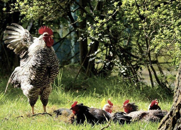 Яйца без скорлупы – как решить проблему?