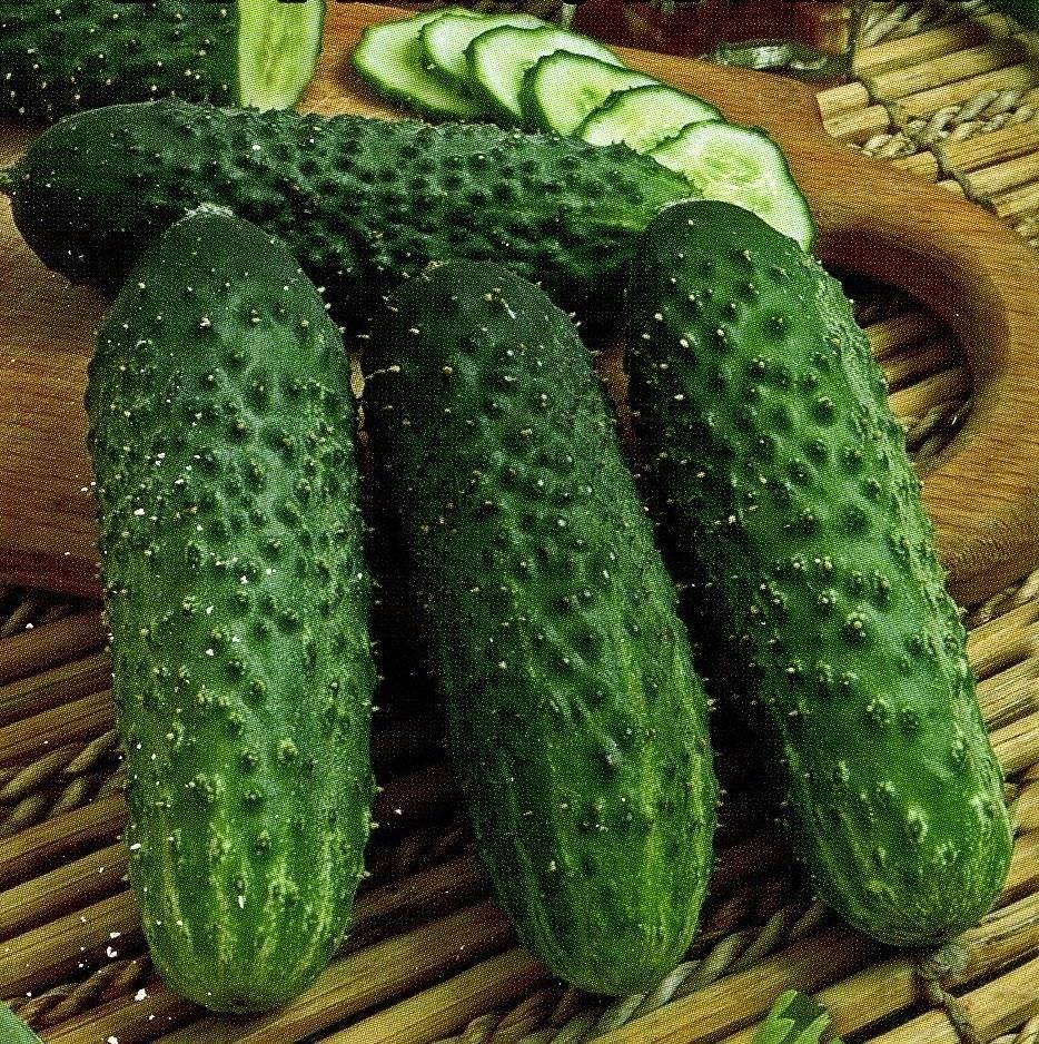 Огурцы сорта паратунка: богатый урожай и замечательный вкус