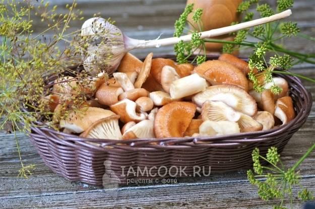 Маринованные грибы: рецепты заготовки на зиму