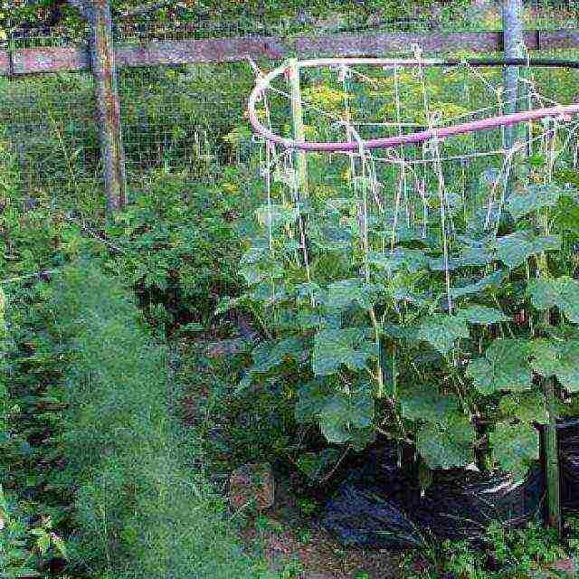 Выращивание огурцов в мешках — пошаговая инструкция