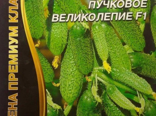 Огурцы буян — описание партенокарпического сорта среднеспелого срока созревания