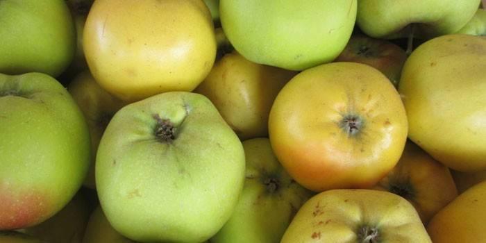 Вино из яблок в домашних условиях - 5 простых рецептов с фото пошагово