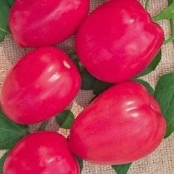Выращиваем аппетитный и полезный томат пинк биф f1 — описание сорта и его главные характеристики