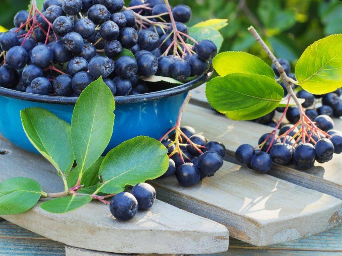 Простые рецепты варенья из черноплодной рябины на зиму
