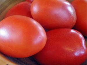 Характеристика, описание и выращивание помидор сорта земляк