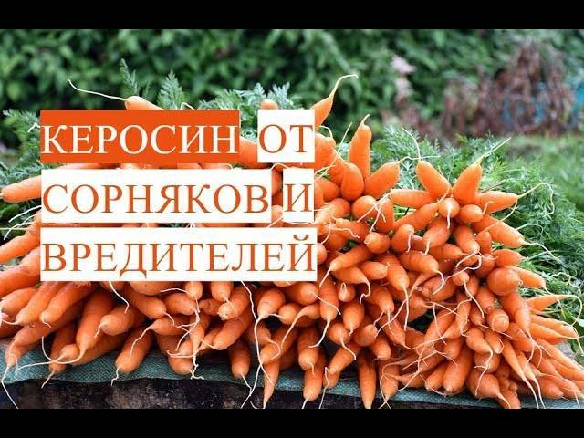 Как подкормить морковь нашатырным спиртом, приготовление и обработка