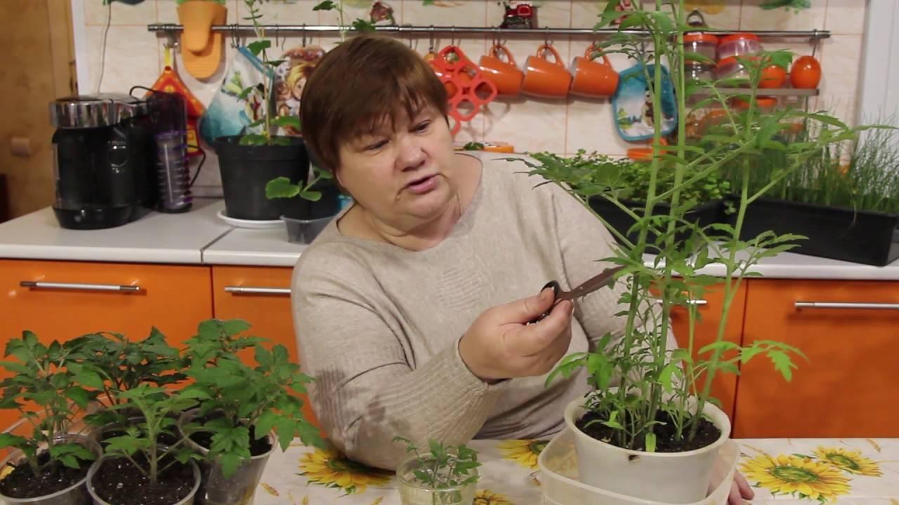 Посев томатов в улитку юлия миняева