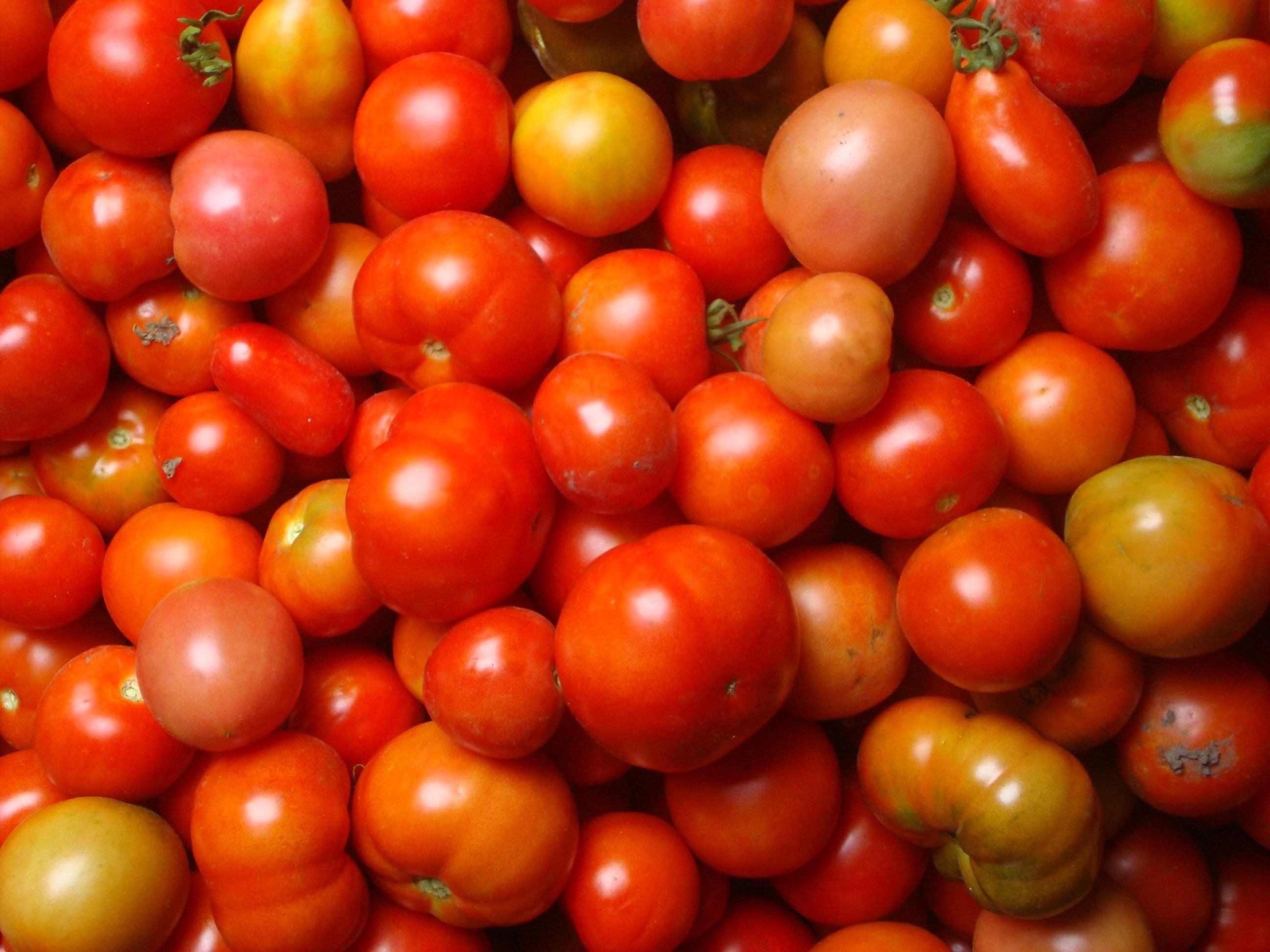 Вкусные рецепты консервирования помидоров с виноградом на зиму