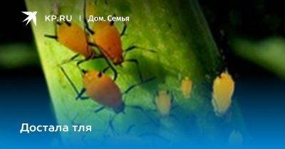 «народные» средства от тли (17-ть лучших, проверенных практикой)