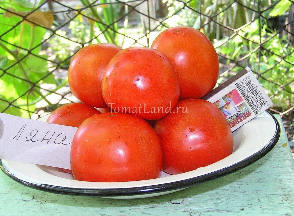 Томат алези: характеристика и описание сорта, его урожайность с фото
