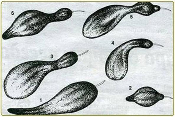Нехватка элементов у огурцов: как устранить недостаток питания
