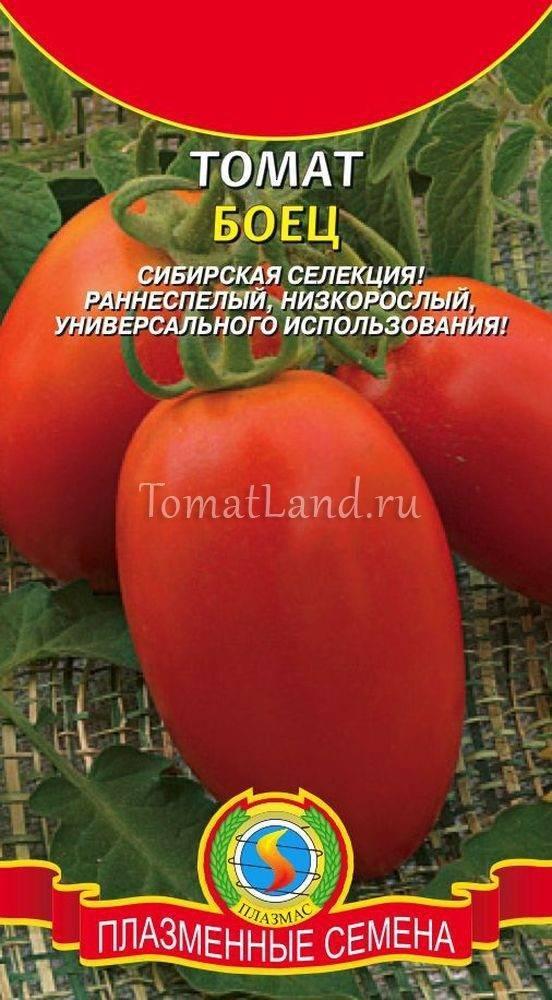 Характеристика и описание сорта томата Боец (Буян), его урожайность