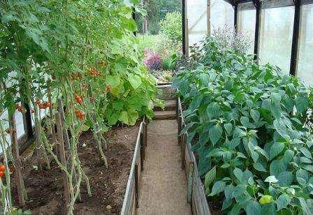 Совместимость с другими овощами: что можно посадить в теплице вместе с огурцами? с чем не ошибиться?