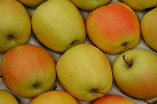 Яблоки голден: описание сорта, химический состав, отзывы