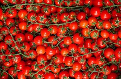 Томат рапунцель: описание сорта, урожайность и отзывы
