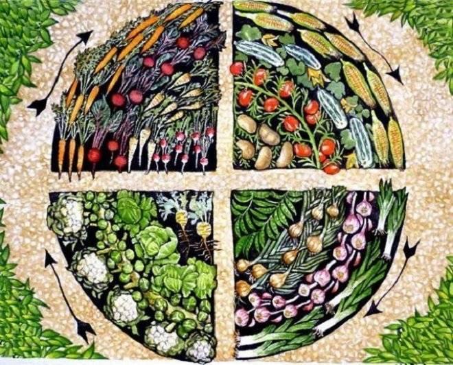 Советы о том, как правильно сажать чеснок и что можно выращивать после него на следующий год