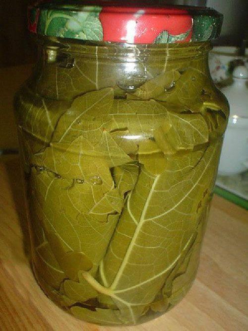 Заготовка виноградных листьев на зиму для долмы. рецепты маринования виноградных листьев на зиму