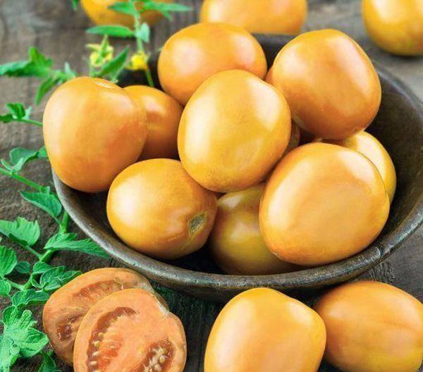 Необычайный томат «золотое руно»: описание сорта, его характеристики и особенности выращивания