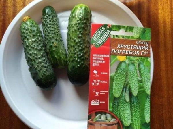 Гибрид огурцов «погребок f1»: фото, видео, описание, посадка, характеристика, урожайность, отзывы