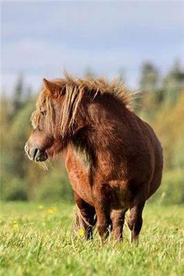 Беременность лошади: сроки, определение, рекомендации, ветеринарная служба владимирской области