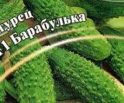 Сорт огурцов барабулька f1