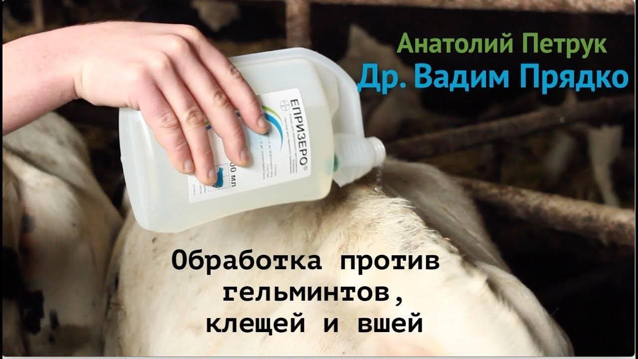 Народные средства от вшей и гнид: применение в домашних условиях
