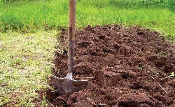 Все о подготовке почвы под огурцы весной и осенью