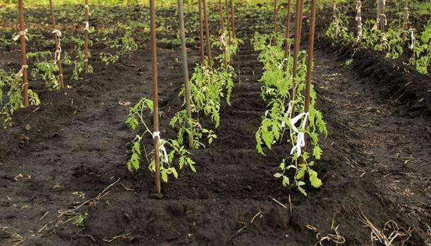 Грунт для рассады: правильная подкормка земли