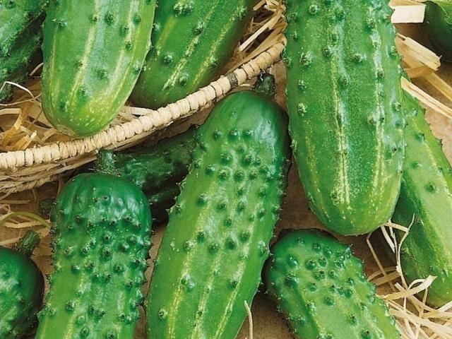 Огурец журавленок f1: описание и характеристика, отзывы