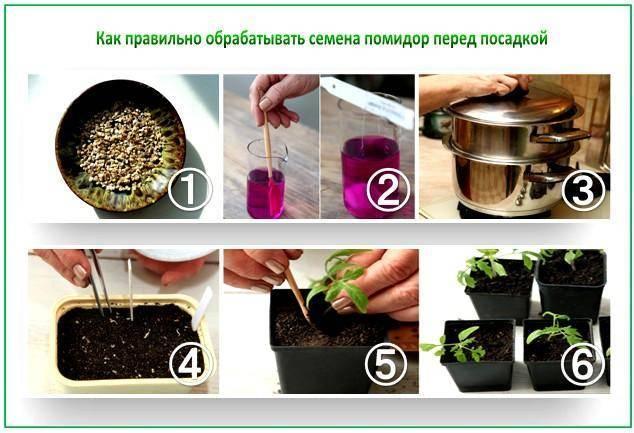 Как подготовить семена томатов к посеву на рассаду