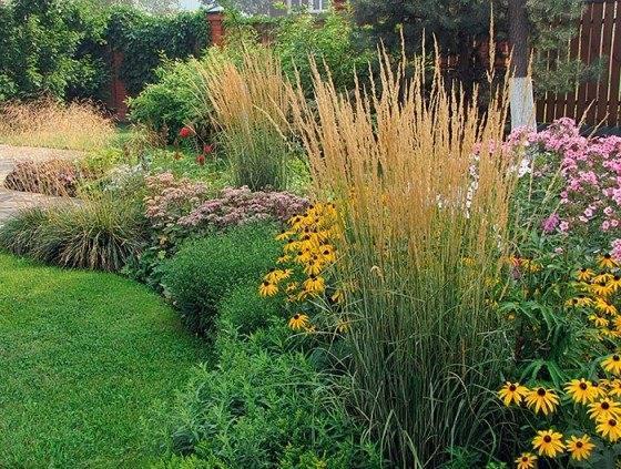 15 лучших видов тенелюбивых растений для сада цветущих все лето