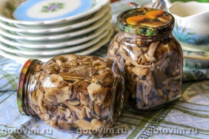 Маринованные опята на зиму: вкусные и простые рецепты маринования опят в домашних условиях