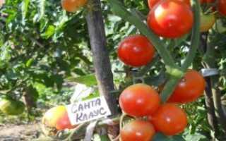 Новые сорта томатов в 2020 году: самые урожайные, для теплицы и открытого грунта